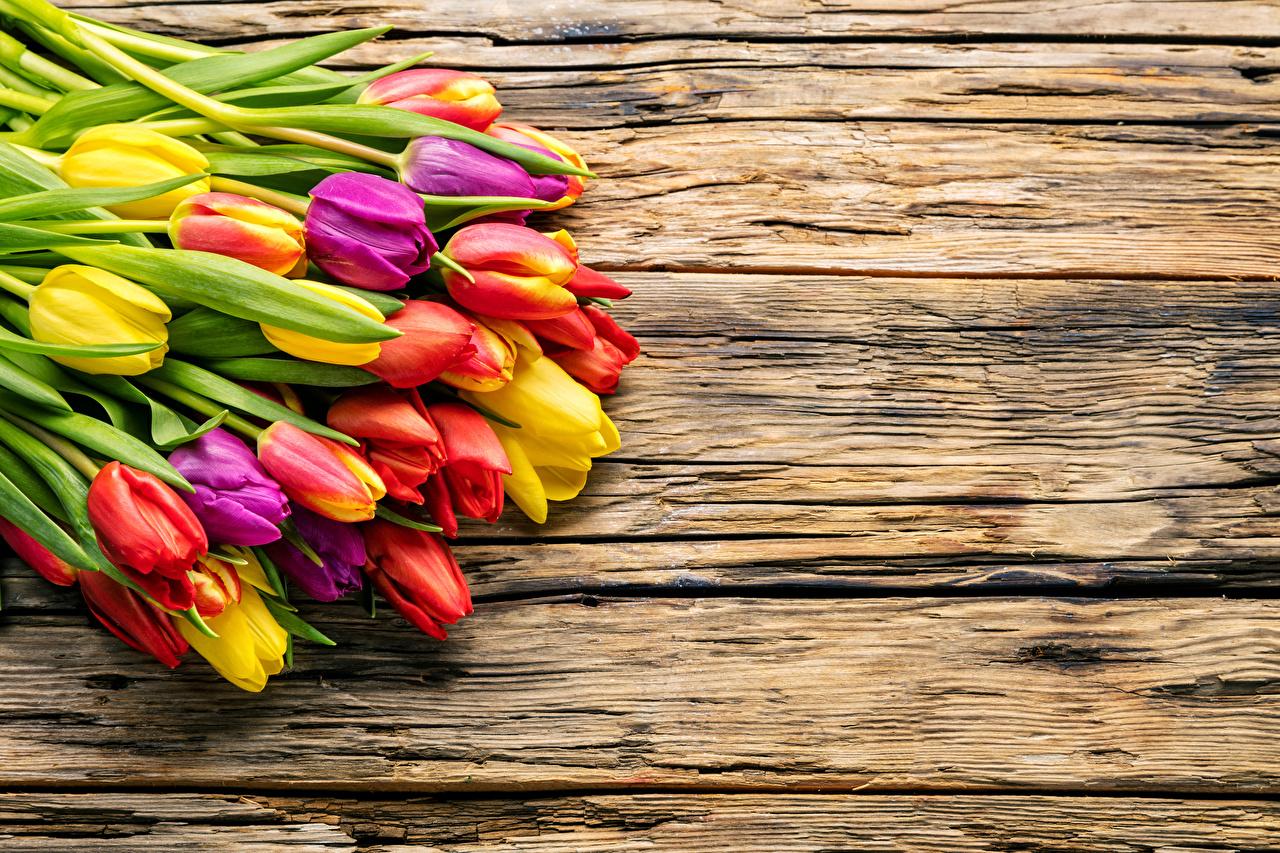 Фотографии Разноцветные тюльпан цветок Много Доски Тюльпаны Цветы