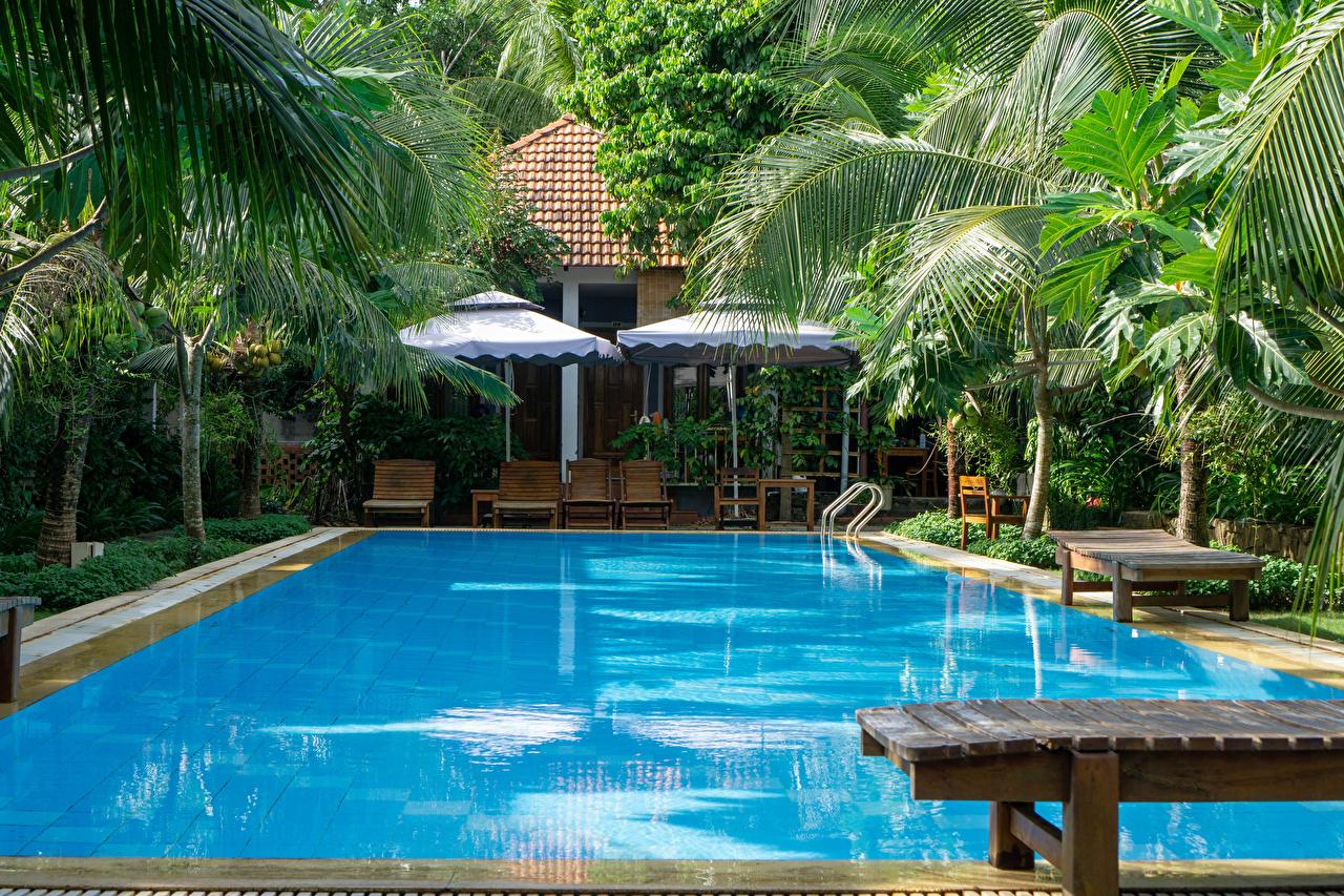 Фотографии Вьетнам Курорты Плавательный бассейн Phu Quoc Island Природа Пальмы Лежаки Бассейны пальм пальма Шезлонг
