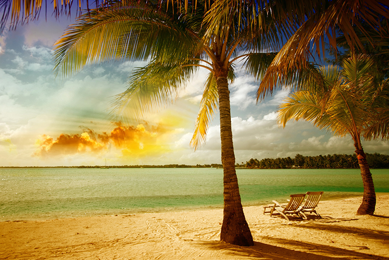 Обои для рабочего стола Природа пальм Песок тропический Побережье песке песка пальма Пальмы Тропики берег