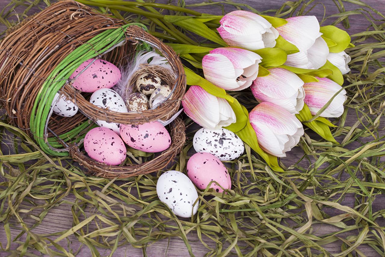 Фотографии Пасха яйцами Тюльпаны Цветы Корзина Праздники яиц яйцо Яйца тюльпан цветок корзины Корзинка