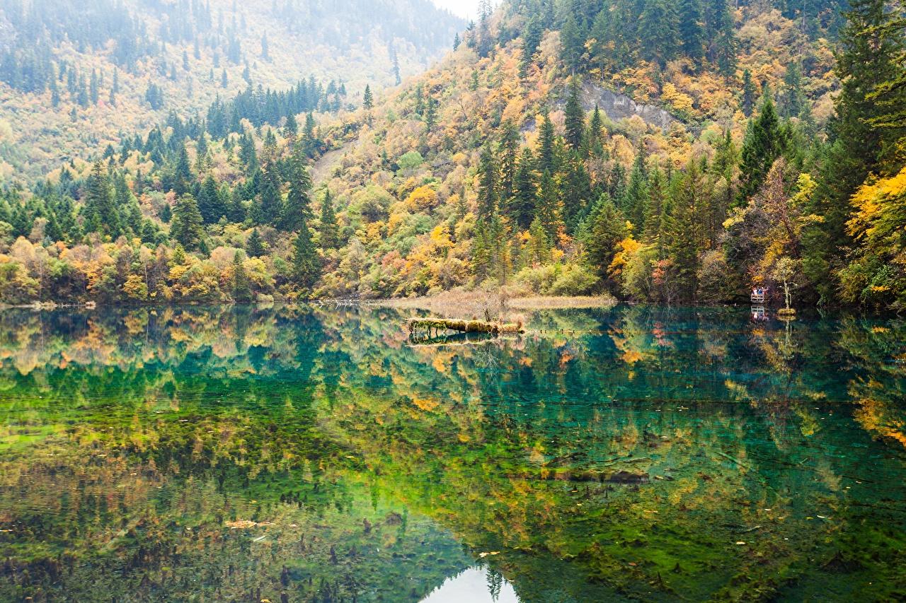 Обои для рабочего стола Природа лес Озеро Вода Деревья Леса воде дерево дерева деревьев