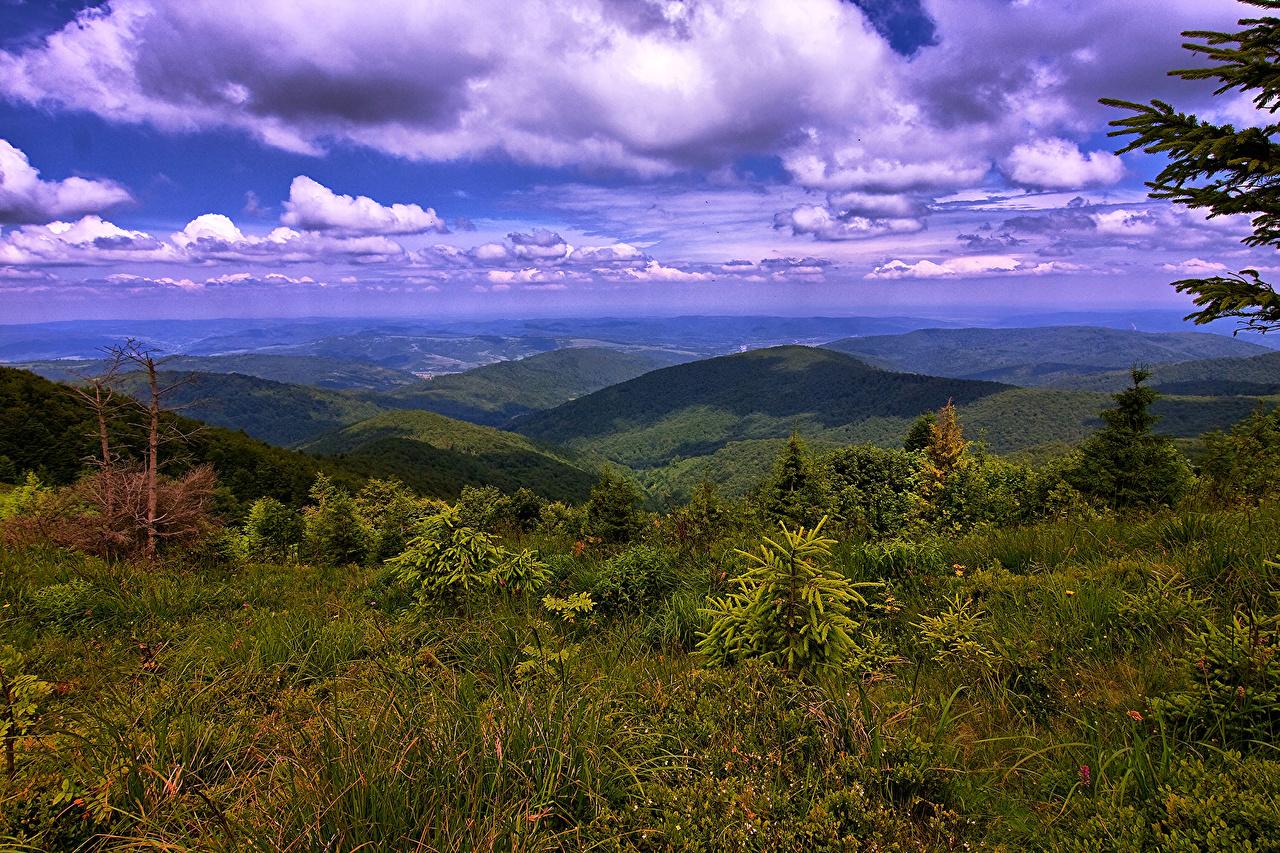 Фотографии Украина Карпаты Горы Природа Пейзаж Кусты Облака гора кустов облако облачно