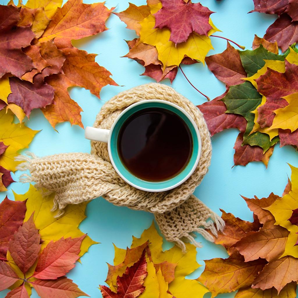 Фотография лист шарфом Чай осенние кружки Продукты питания Листва Листья Шарф шарфе Осень Еда Пища Кружка кружке
