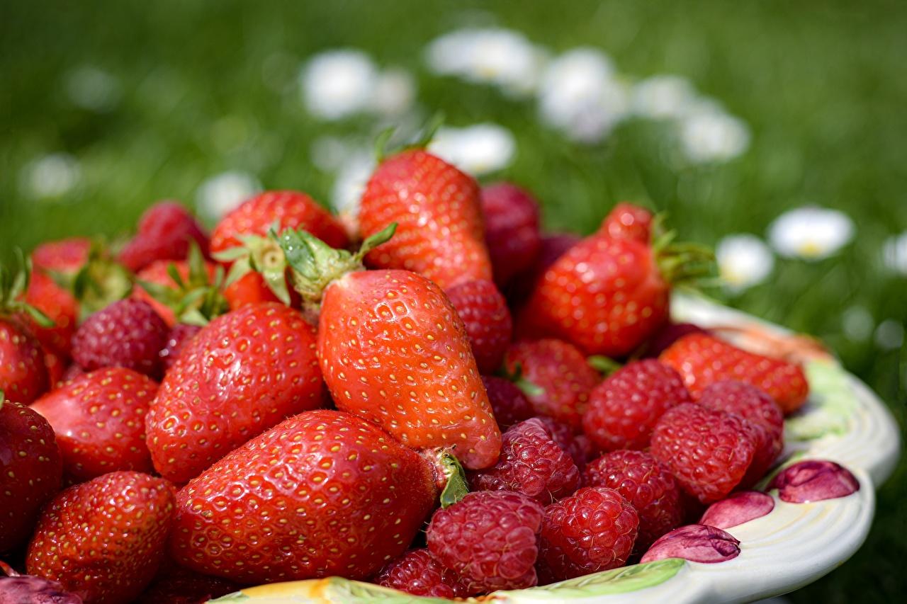 Фотография красная Малина Клубника Еда Ягоды Много красных красные Красный Пища Продукты питания