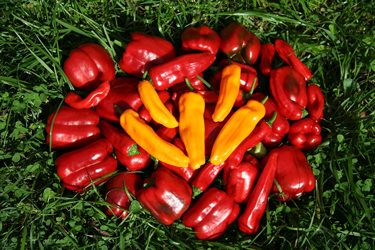 Фотография Пища Овощи Перец траве Еда Трава перец овощной Продукты питания