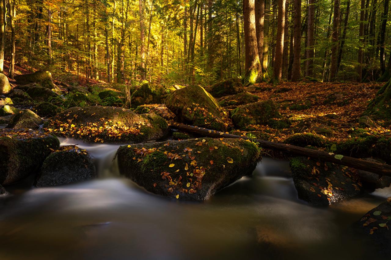 Картинки Бавария Листья Германия Ручей осенние Природа лес мхом Камень лист Листва Осень ручеек Леса Мох мха Камни