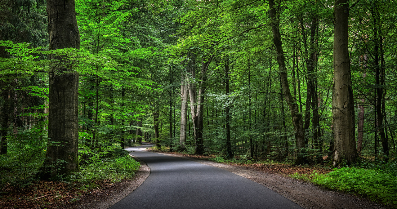 Картинки Германия Природа лес Дороги Деревья Леса дерево дерева деревьев