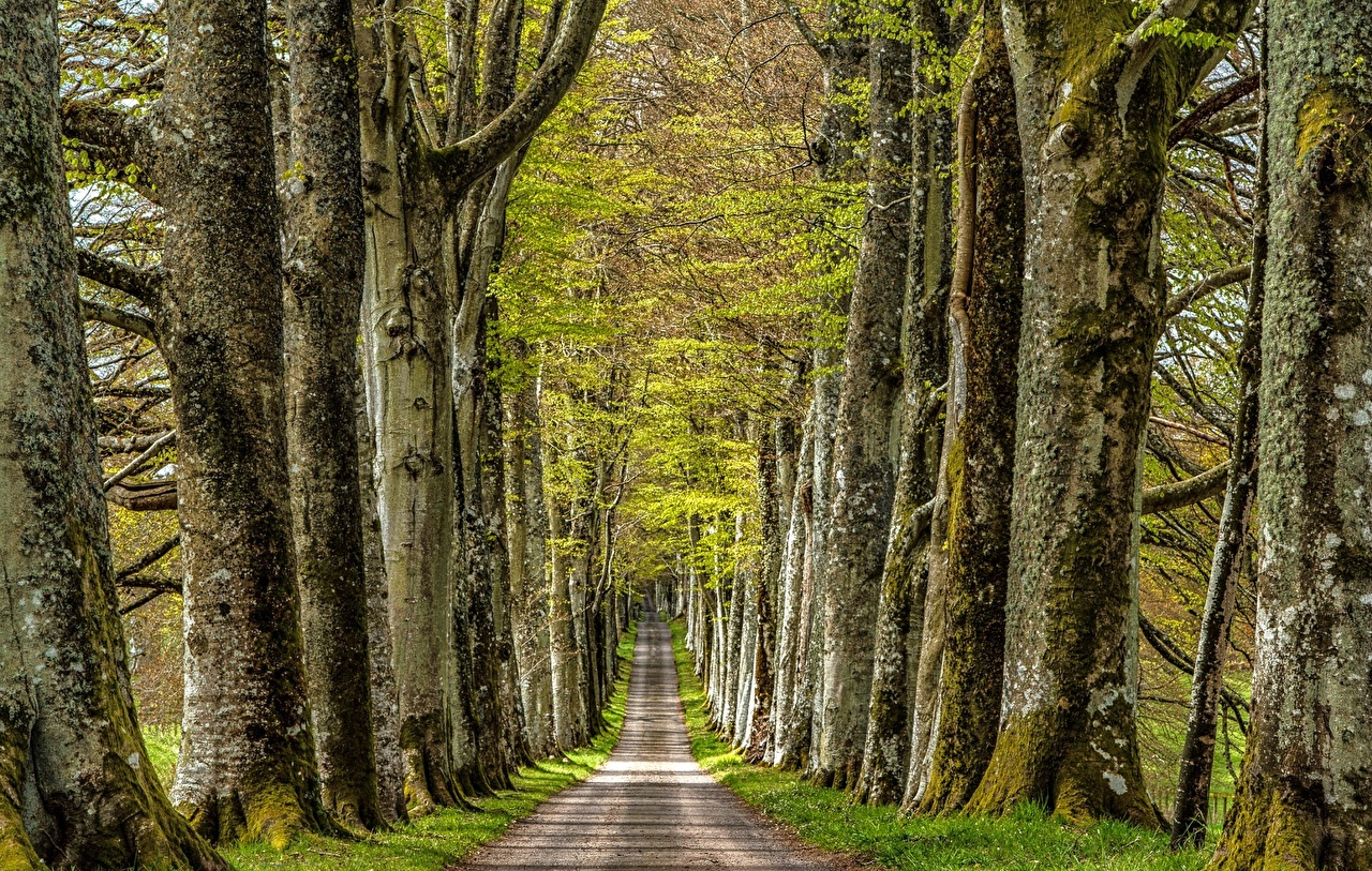 Картинки Аллея Природа Дороги Деревья аллеи дерево дерева деревьев