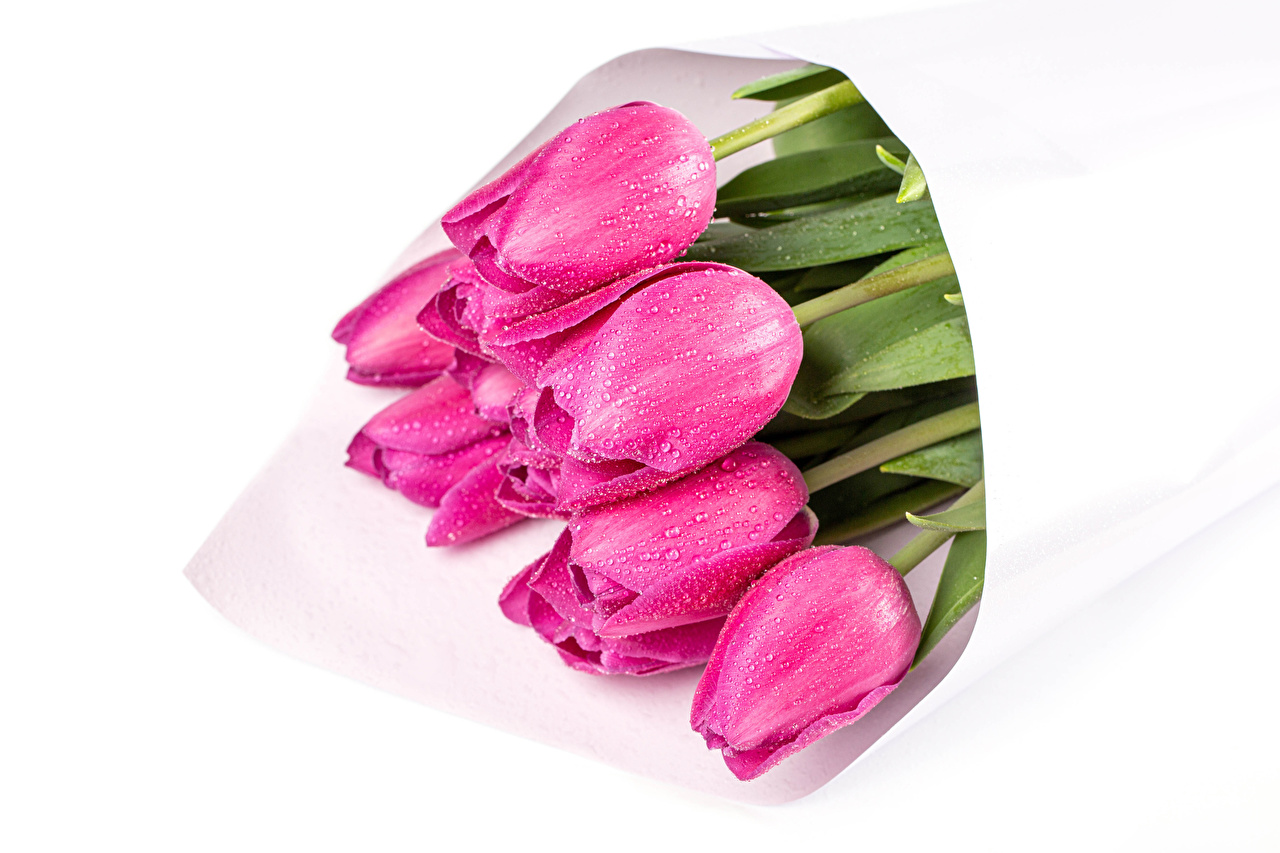 Картинка Букеты Розовый Тюльпаны Капли цветок Белый фон букет тюльпан розовая розовые розовых капля Цветы капель капельки белом фоне белым фоном