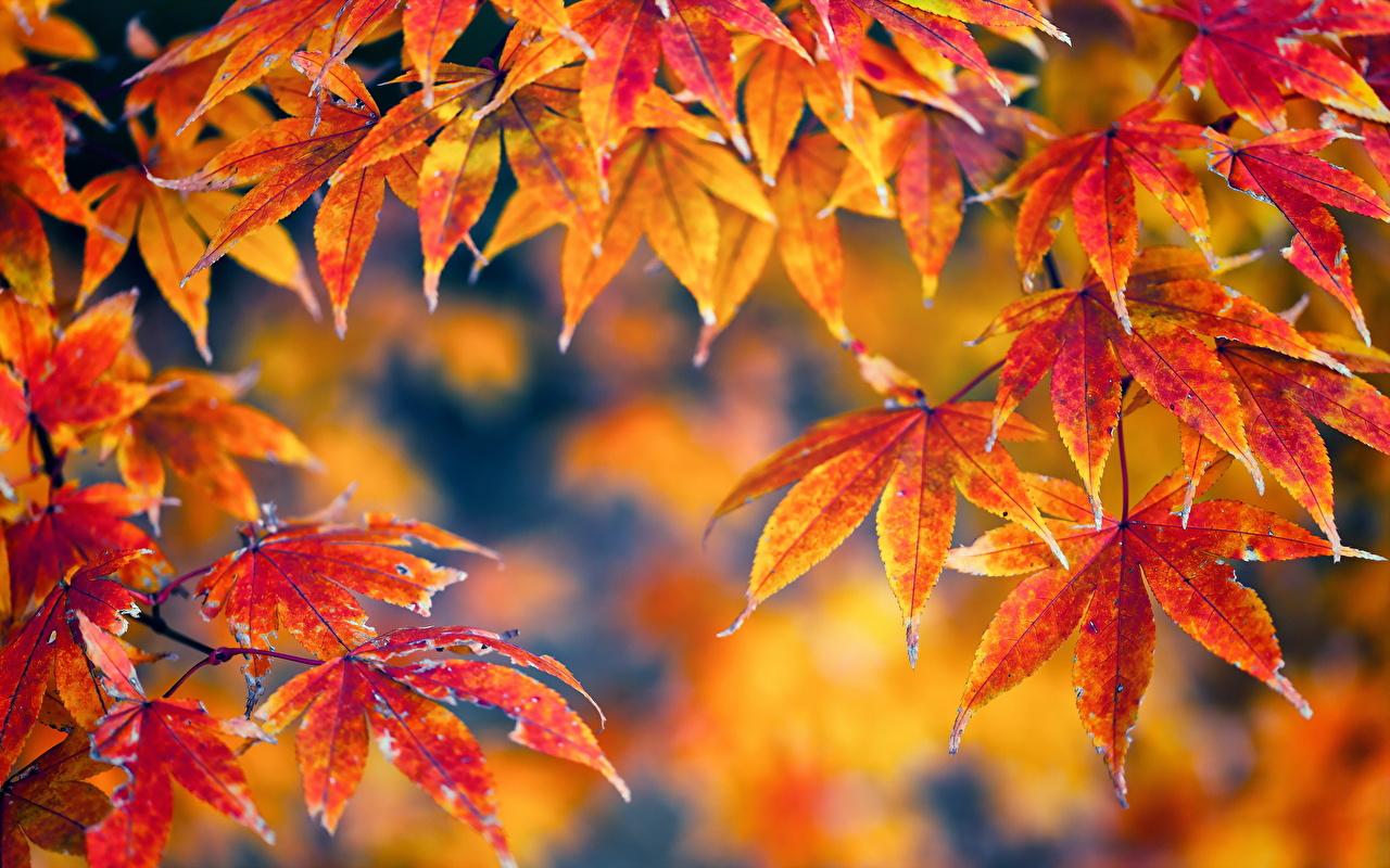 картинки осень листва