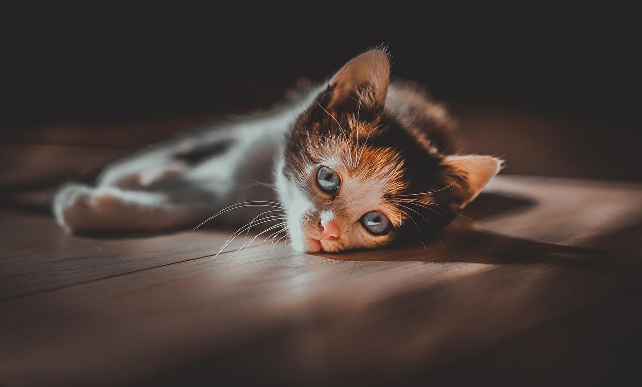 Фото Котята кошка Взгляд Животные котят котенка котенок кот коты Кошки смотрит смотрят животное