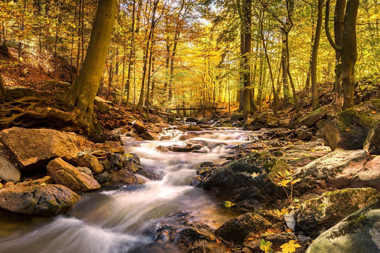Картинки Ручей Мосты осенние Природа Леса Мох Камень мост Осень ручеек лес мха мхом Камни