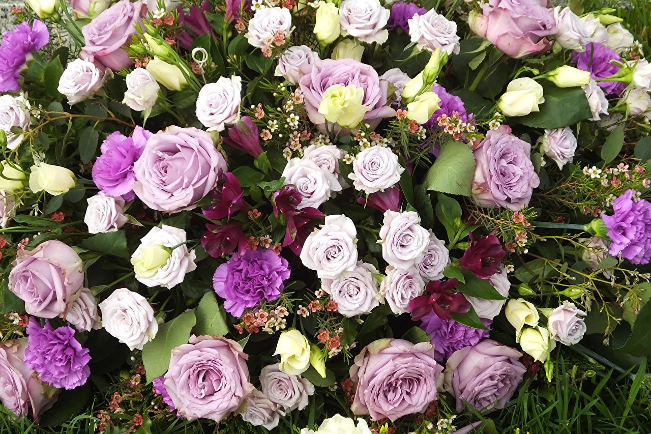 Обои для рабочего стола Розы цветок Эустома гвоздика роза Цветы Гвоздики Лизантус