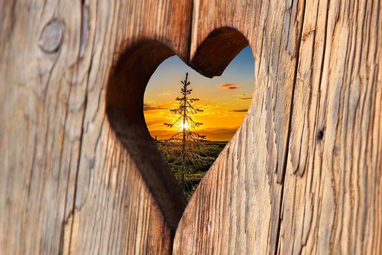 Фотографии Сердце ели рассвет и закат Доски серце сердца сердечко Ель Рассветы и закаты