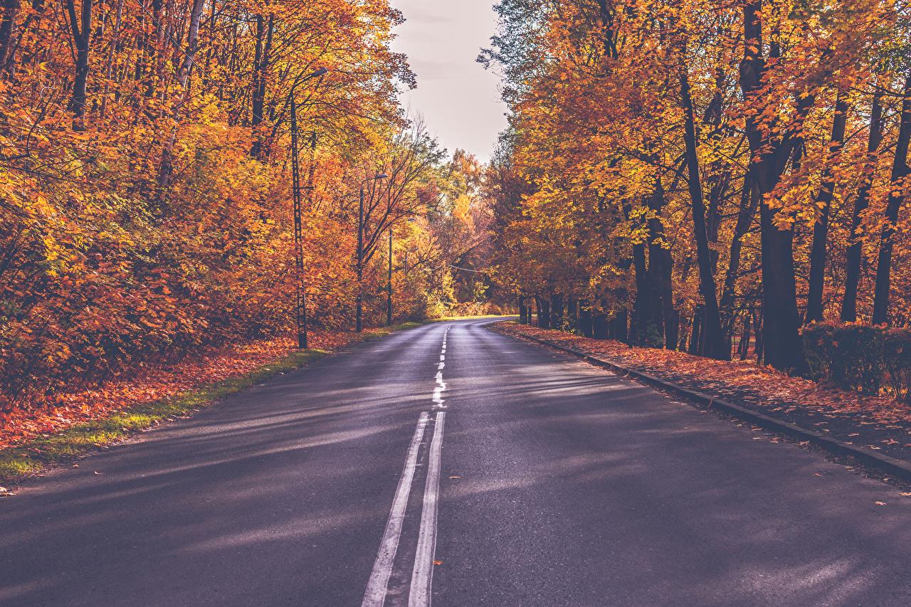 Картинки Осень Природа Леса Дороги Деревья осенние