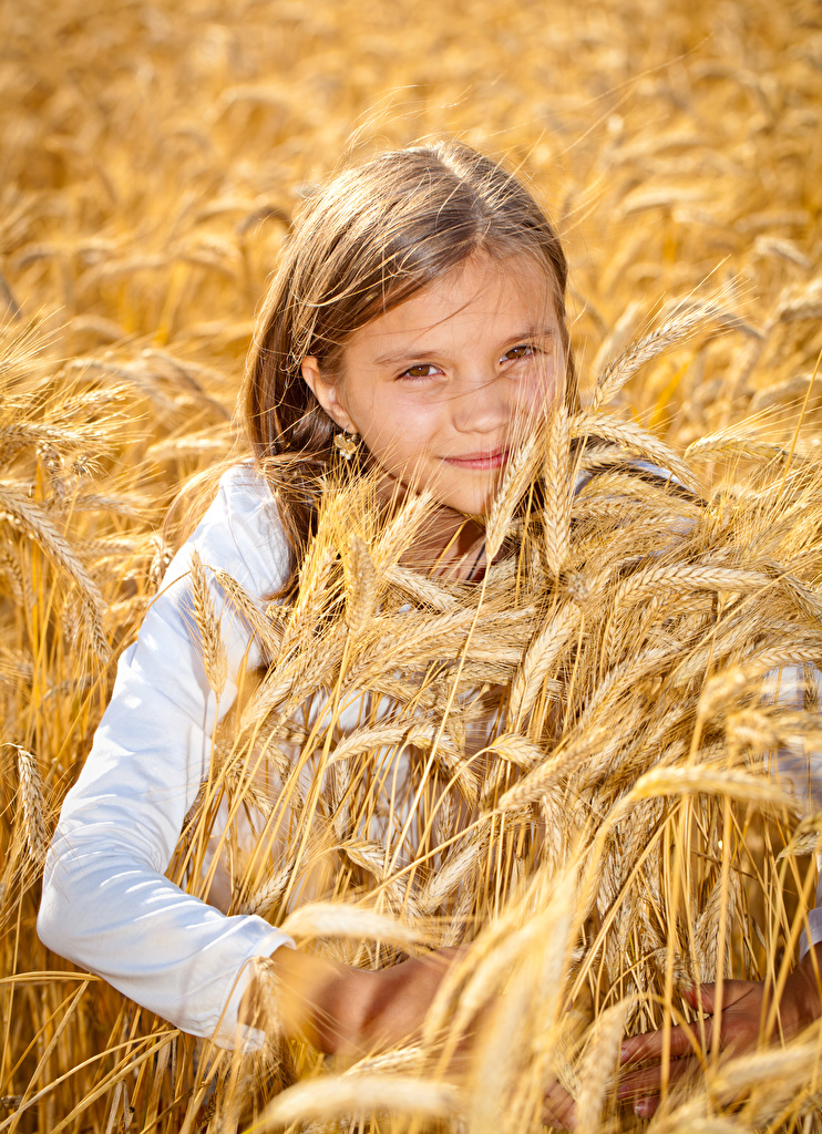 Фотография Девочки Дети Колос смотрят  для мобильного телефона девочка ребёнок колосья колоски колосок Взгляд смотрит