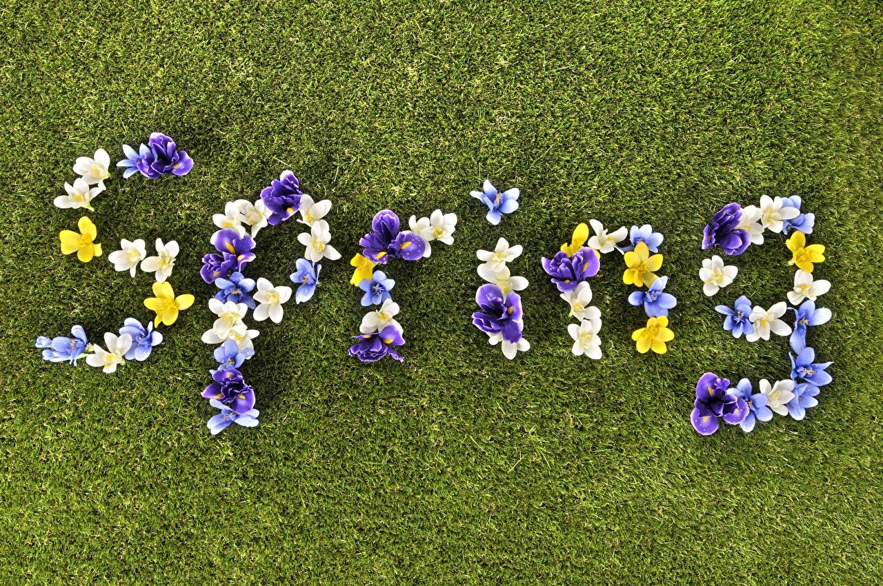 Фото Английский Spring весенние Цветы Слово - Надпись Газон английская инглийские Весна слова текст цветок газоне