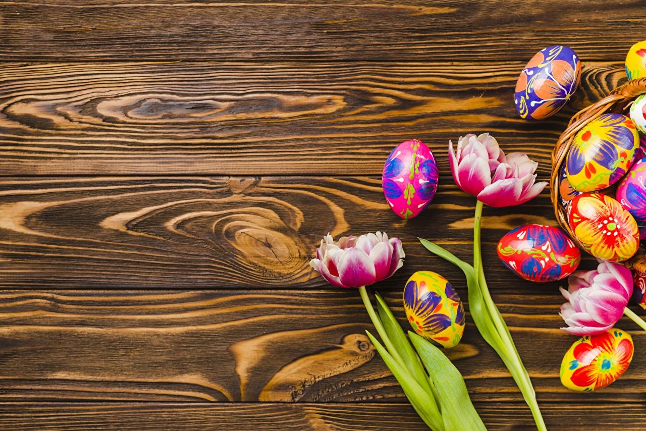 Фотография Пасха яйцо Доски яиц Яйца яйцами