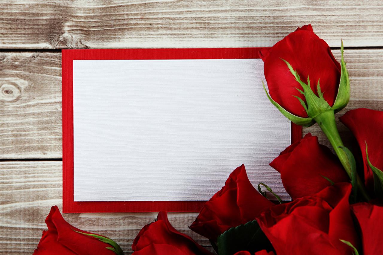 Фото Розы Красный Цветы Шаблон поздравительной открытки