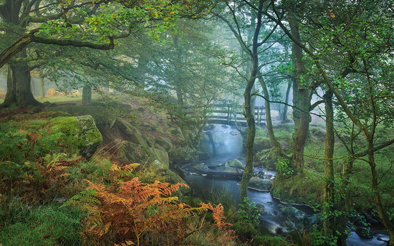 Фото Мосты Осень Ручей Природа Парки деревьев мост ручеек осенние парк дерево дерева Деревья