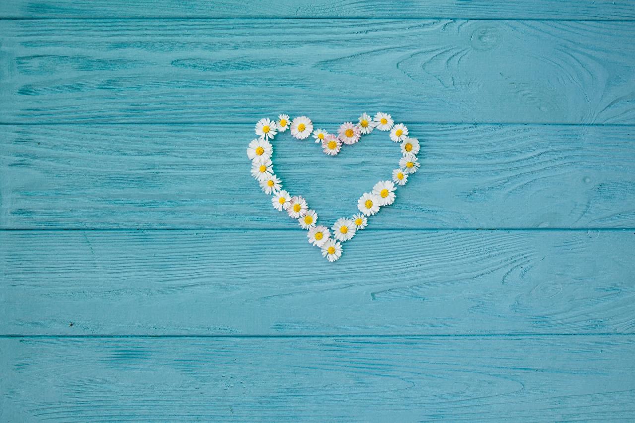 Фото сердца ромашка Шаблон поздравительной открытки Доски серце Сердце сердечко Ромашки