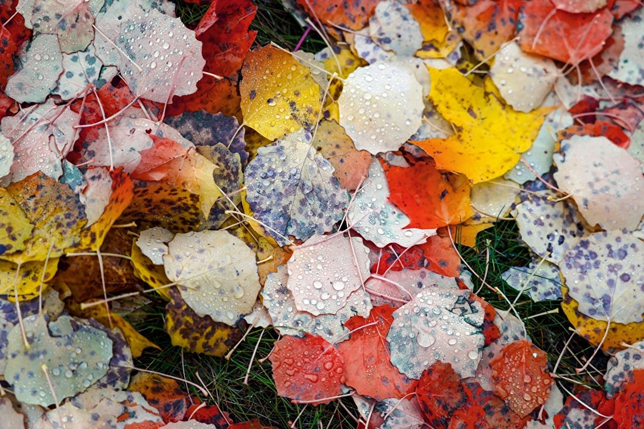 Картинки Листья Разноцветные Осень Природа Капли Крупным планом лист Листва осенние капля капель капельки вблизи
