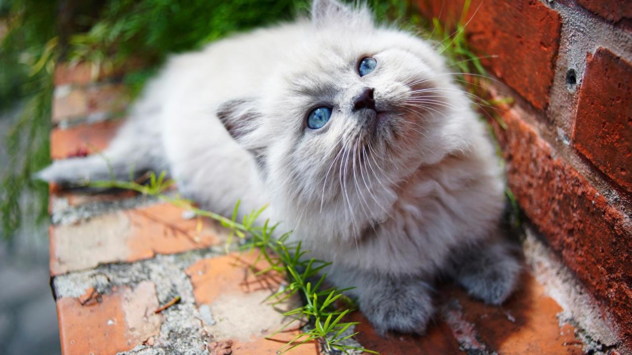 Фотографии котят Кошки смотрят животное Котята котенка котенок кот коты кошка Взгляд смотрит Животные
