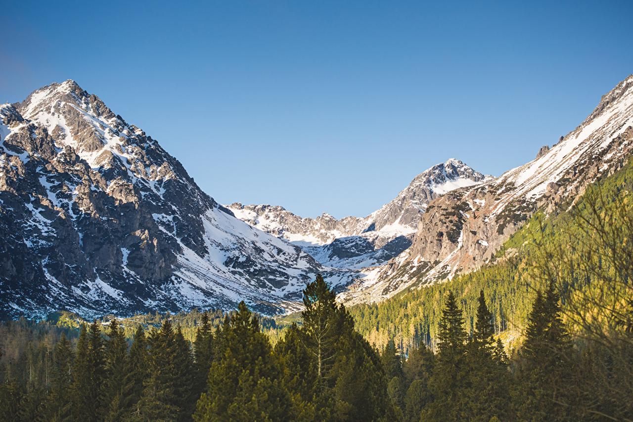 Фотография Tatras Mountains Горы Природа Леса снегу Пейзаж гора лес Снег снеге снега