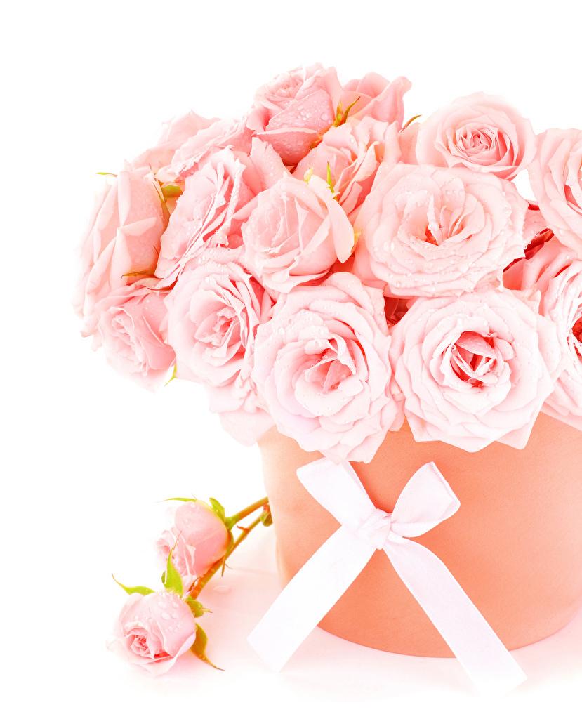Картинка Букеты Розы розовая Цветы Бантик Белый фон розовых розовые Розовый бант бантики белом фоне белым фоном