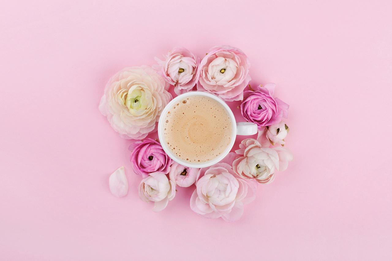 Картинки Кофе Капучино Цветы Лютик Пища чашке Сверху Цветной фон цветок Еда Чашка Продукты питания