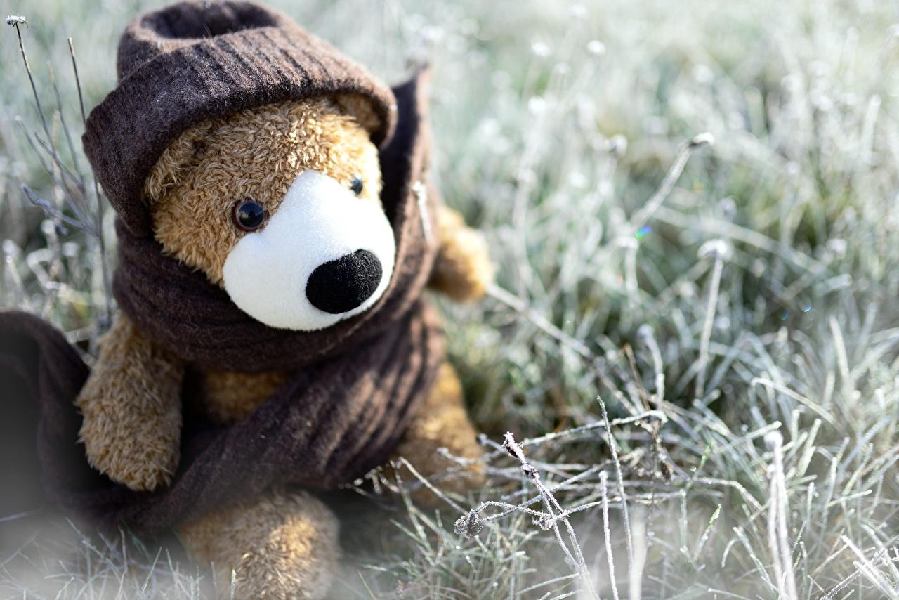 Картинка Шарф в шапке Плюшевый мишка Сидит Трава Игрушки шарфе шарфом шапка Шапки Мишки сидя траве сидящие игрушка