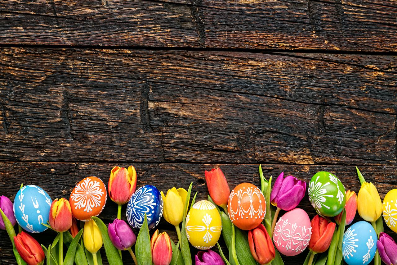 Фотография Пасха Разноцветные яиц Тюльпаны Цветы Доски яйцо Яйца яйцами цветок