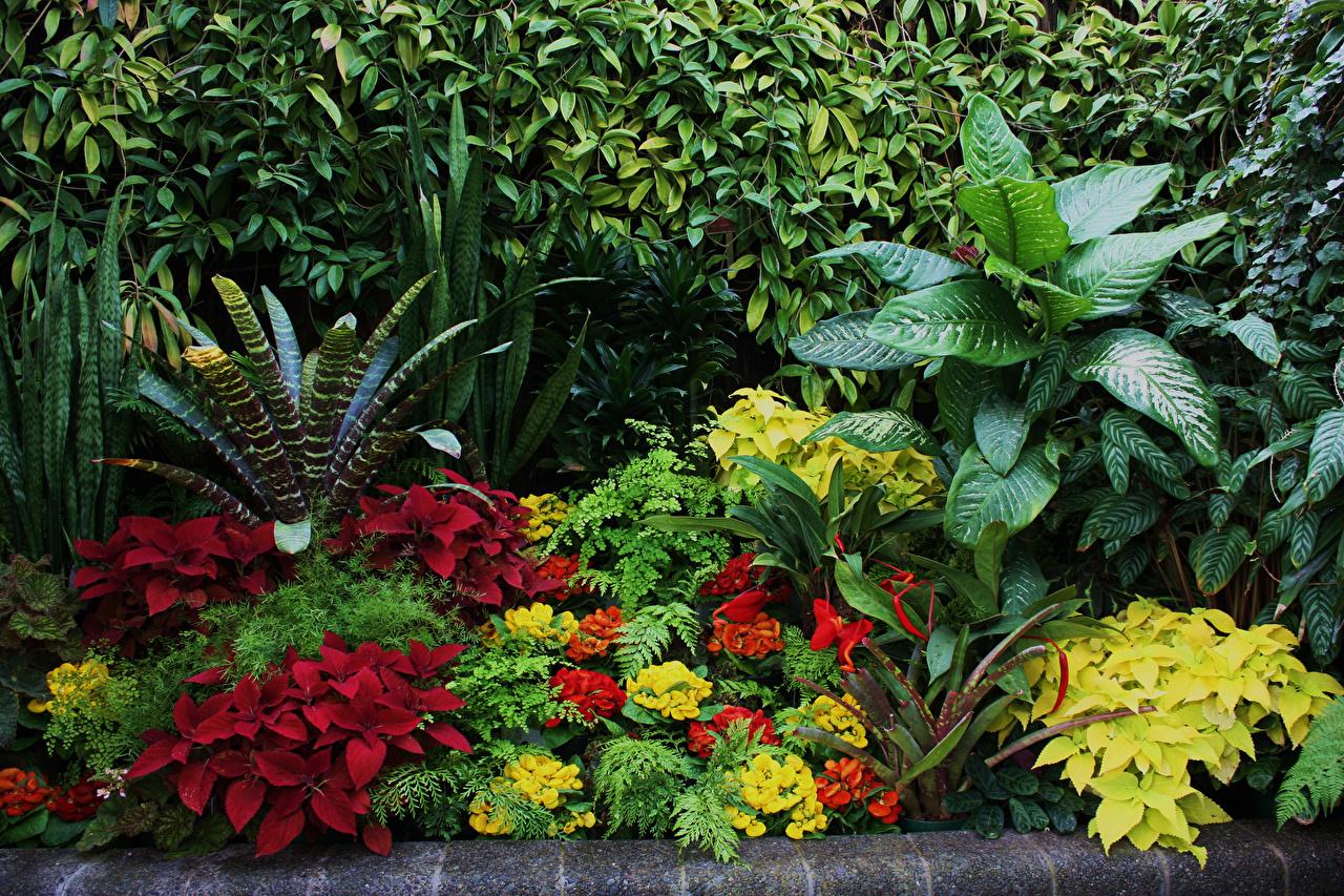 Фото Листья Новая Зеландия Wellington Botanical Garden Природа Сады Колеус Кампсис Кусты лист Листва кустов