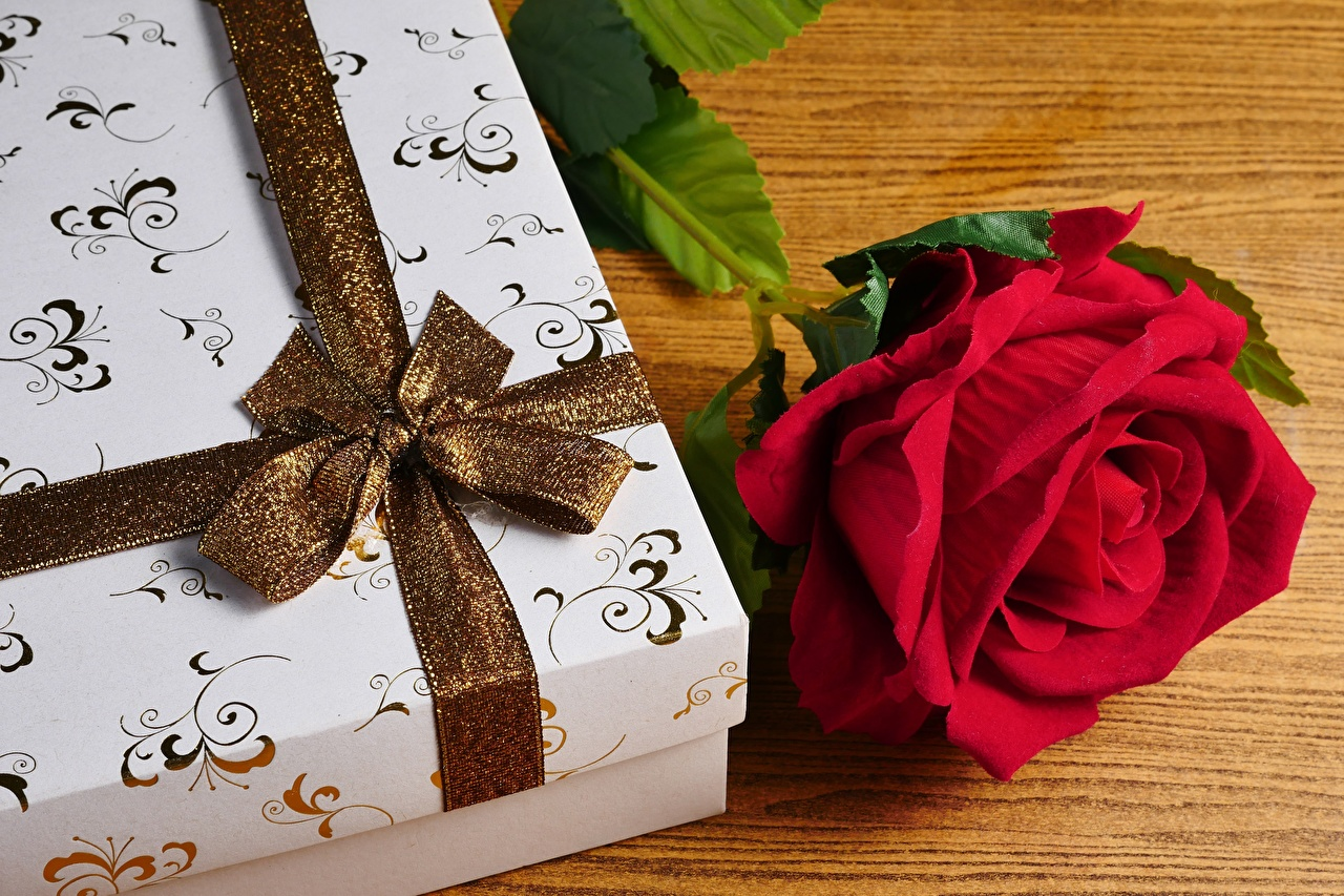 Фото роза Цветы Коробка подарок Лента Бантик Розы цветок коробки коробке Подарки подарков бант бантики ленточка
