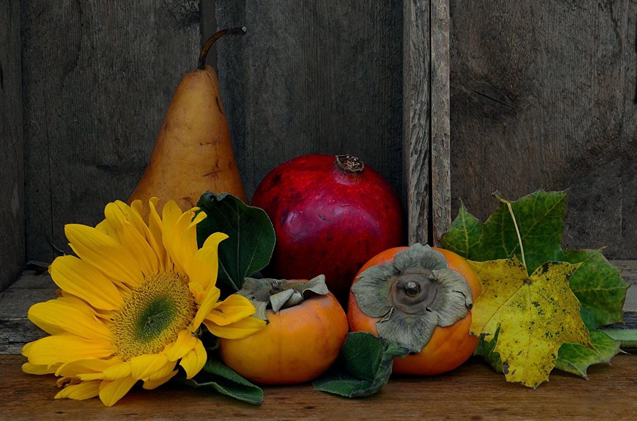 Картинки Хурма Груши Гранат цветок Подсолнухи Продукты питания Цветы Подсолнечник Еда Пища