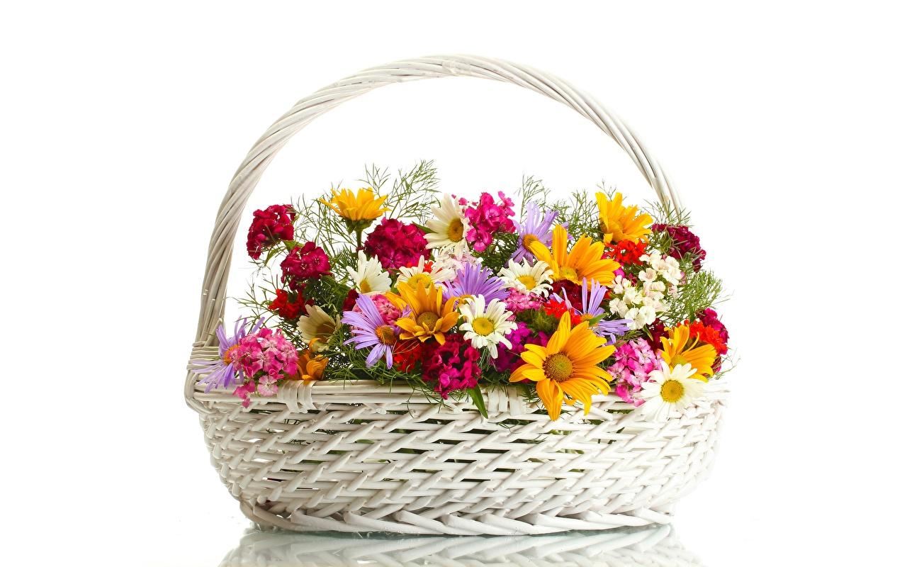 Фото цветок Корзина Ромашки белом фоне Цветы корзины ромашка Корзинка Белый фон белым фоном
