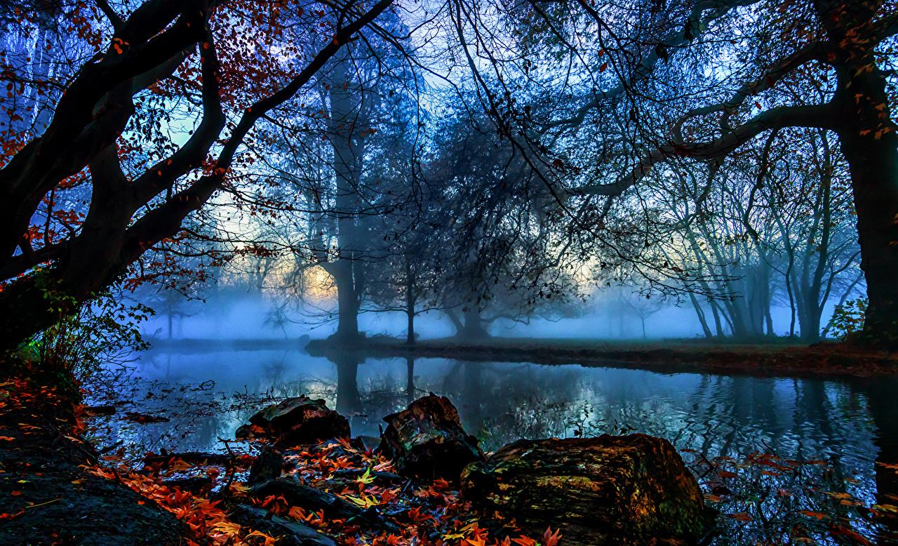 Фото лондоне Англия Morden Hall Park Туман Осень Природа Реки ветка деревьев Лондон тумана тумане осенние река Ветки ветвь речка на ветке дерево дерева Деревья