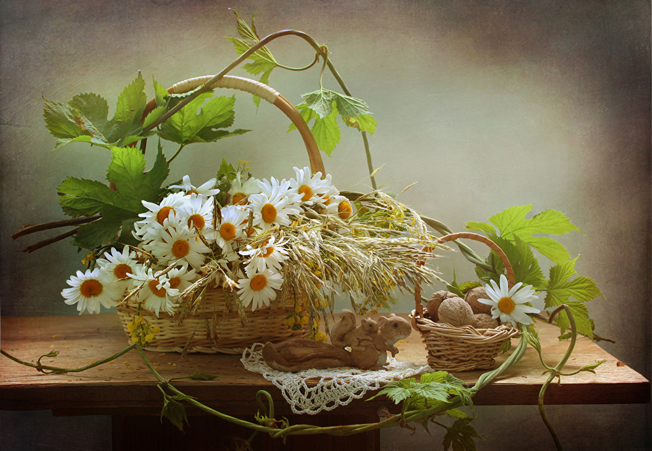 Обои Белки Цветы Ромашки Корзинка Стол Орехи Натюрморт Корзина