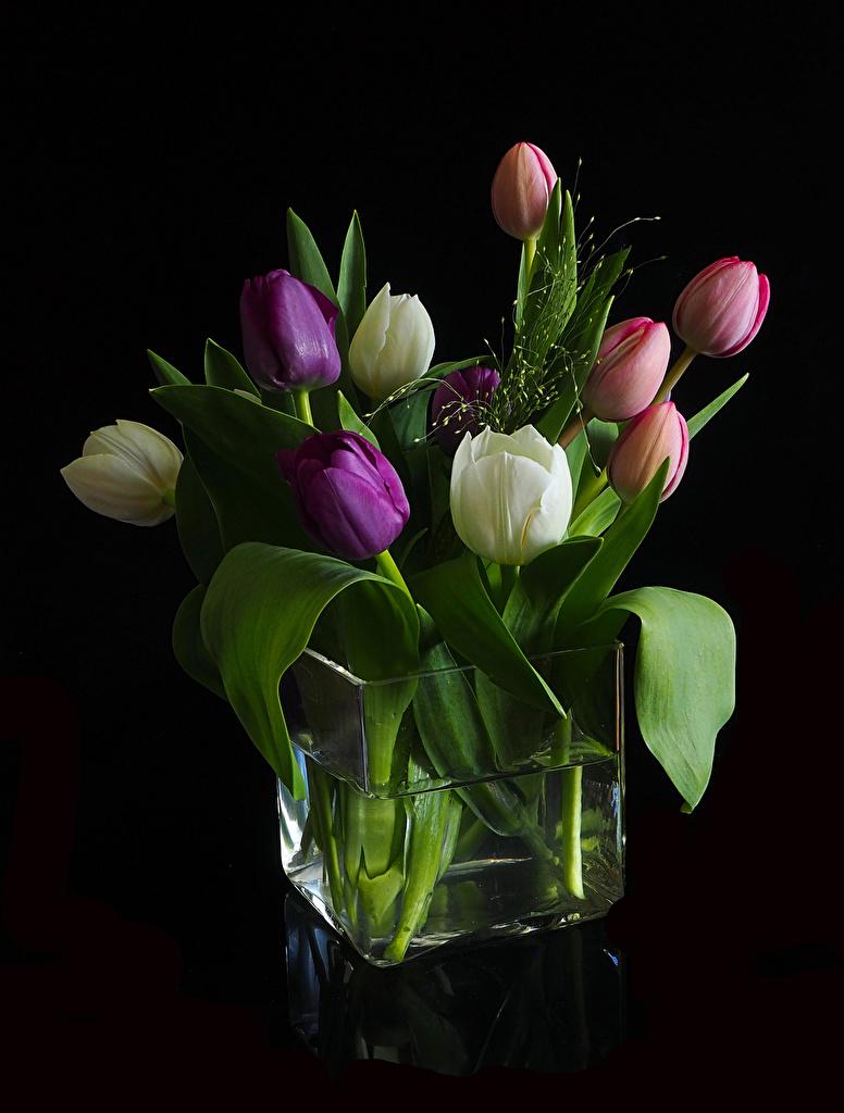 Обои для рабочего стола Тюльпаны Цветы Ваза Черный фон  для мобильного телефона тюльпан цветок вазе вазы на черном фоне