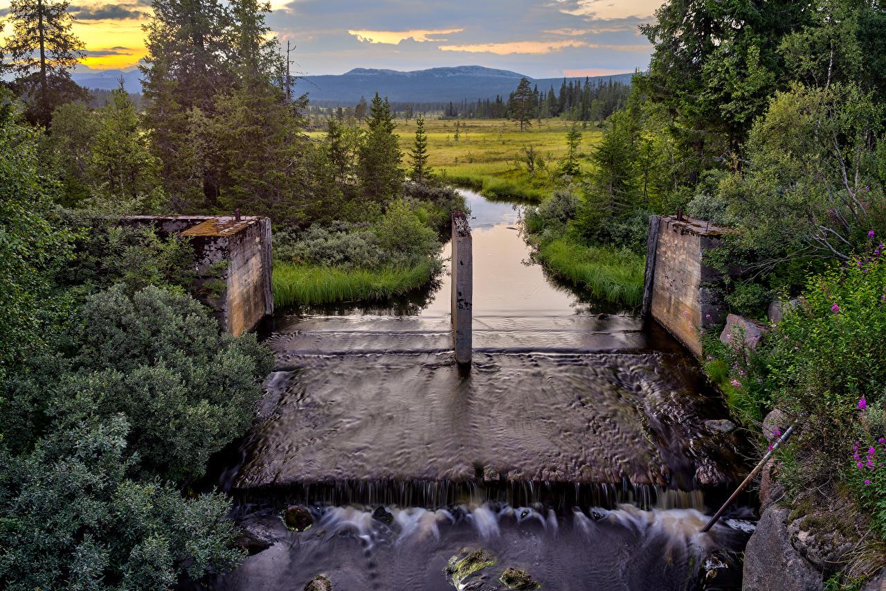 Обои Норвегия Innbygda Hedmark Fylke Ель Природа речка Кусты Реки