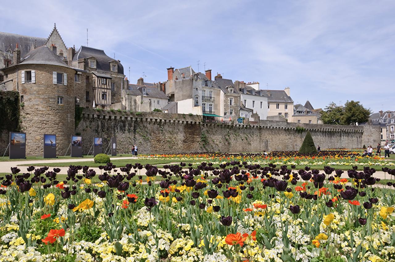 Фотографии Франция Van, Brittany Тюльпаны Сады Города тюльпан город