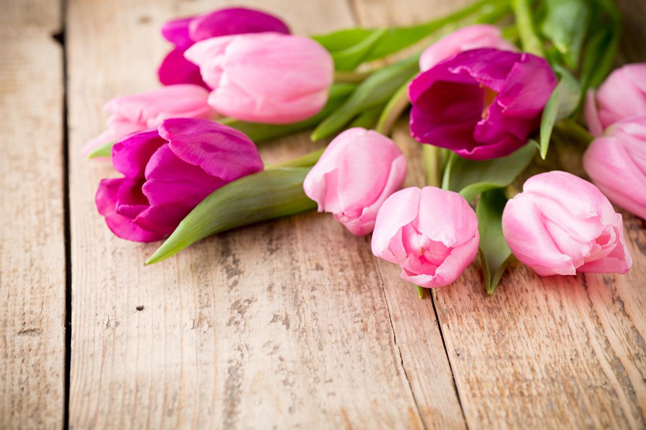 Цветы картинки крупным планом 6