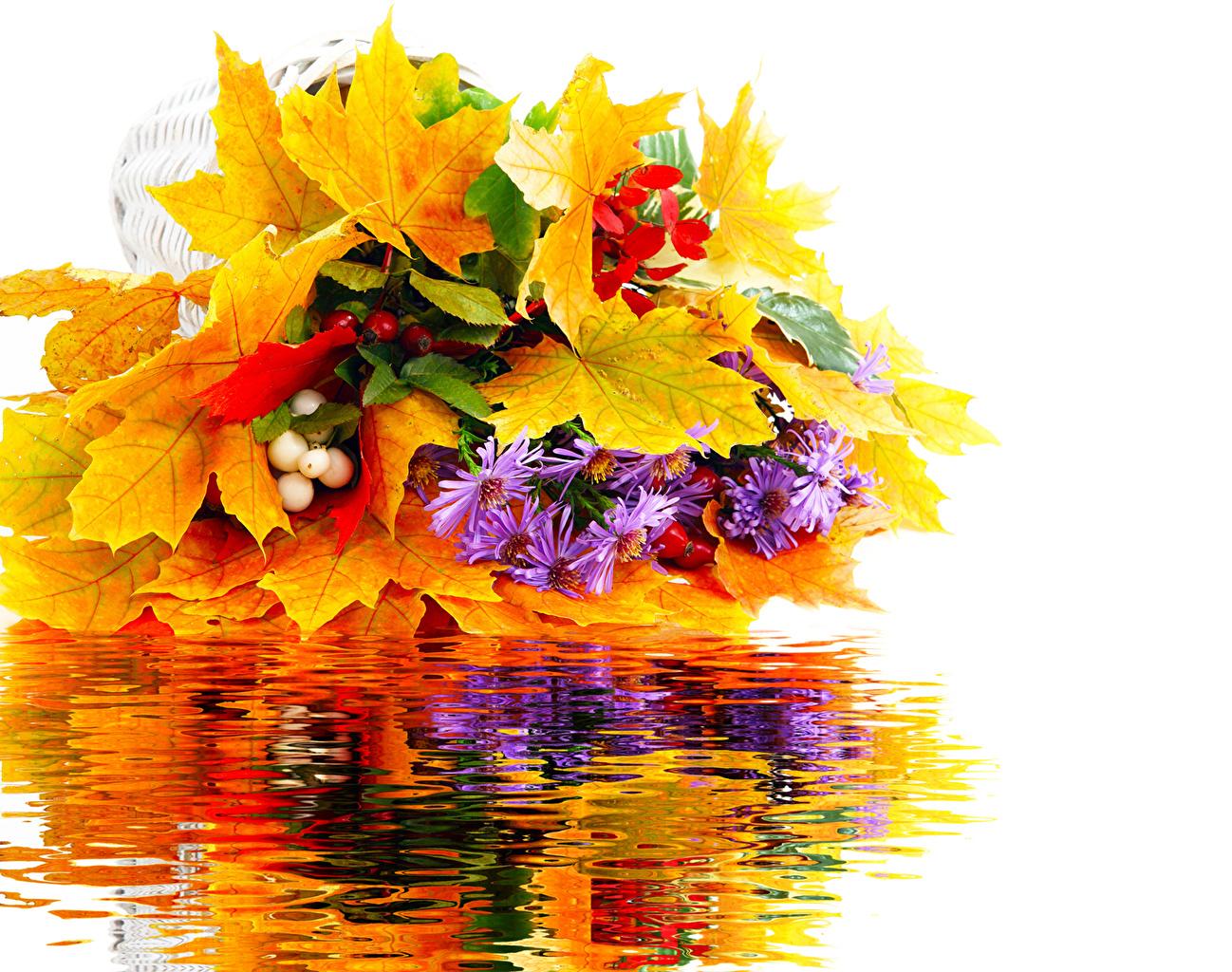 Фотография Листва Осень Цветы Хризантемы лист Листья осенние цветок
