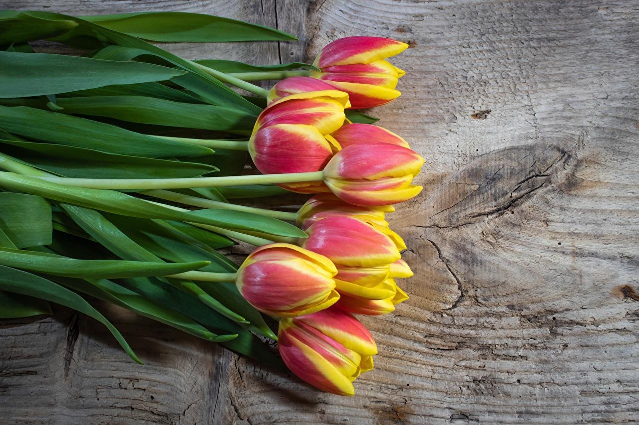 Фотографии Тюльпаны Цветы Доски тюльпан цветок