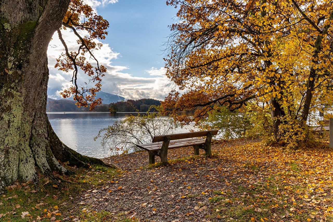 Фото Листья Германия Seehausen осенние Природа Скамья Побережье Деревья лист Листва Осень берег Скамейка дерево дерева деревьев
