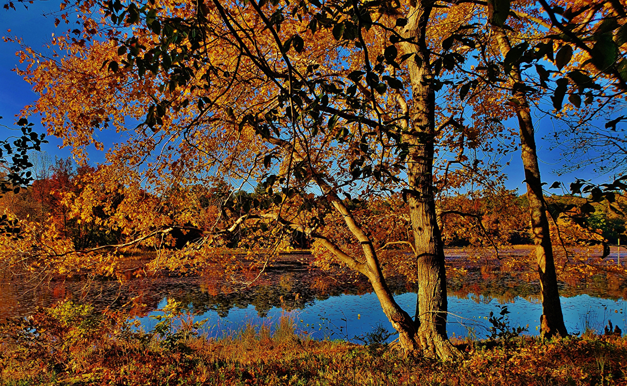Обои для рабочего стола штаты Maryland Cash Lake Природа осенние Озеро дерево США америка Осень дерева Деревья деревьев