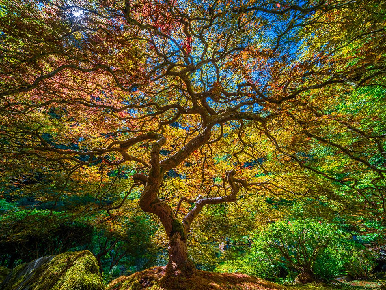 Фото америка Portland, Japanese Garden HDRI Природа Сады ветвь дерево США штаты HDR Ветки ветка на ветке дерева Деревья деревьев