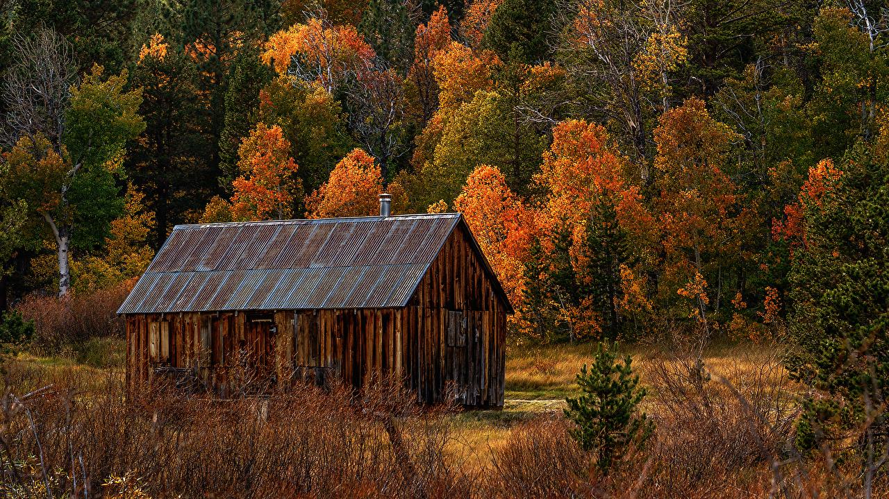 Фотографии Калифорния америка Hope Valley Ель осенние Природа лес Дома калифорнии США штаты ели Осень Леса Здания