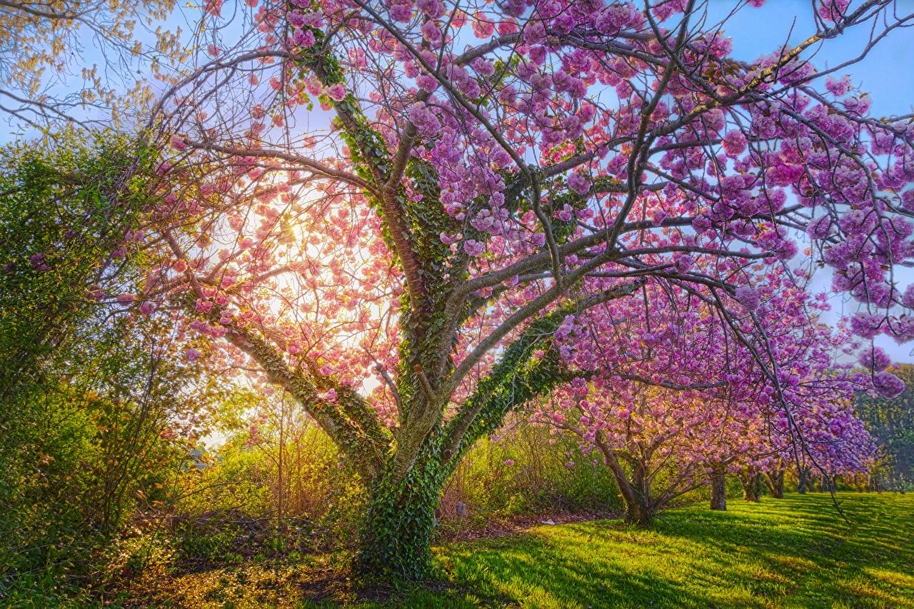 Обои для рабочего стола HDR Весна Природа Трава Цветущие деревья Времена года HDRI весенние траве сезон года