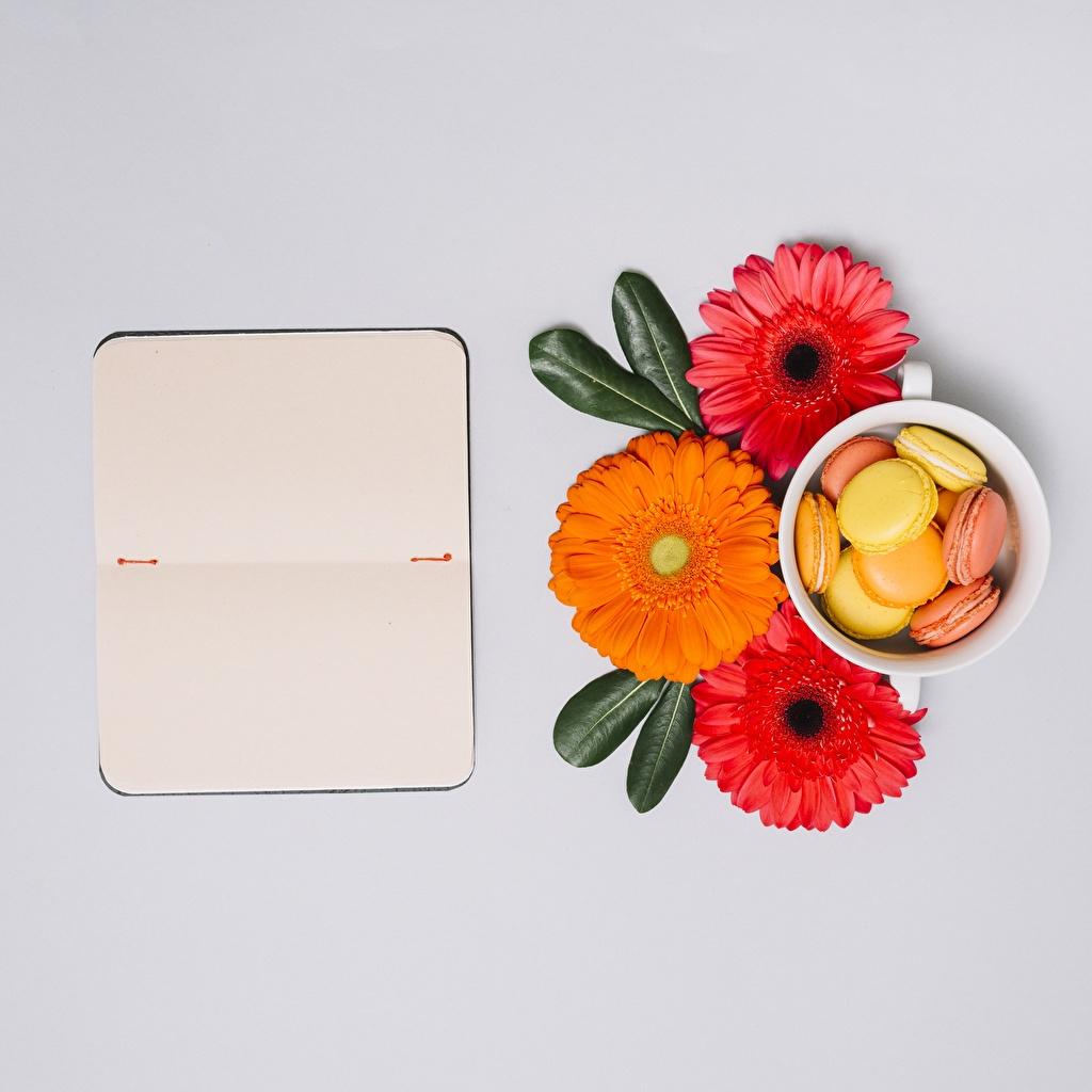Обои Макарон Блокнот Герберы цветок Цветы